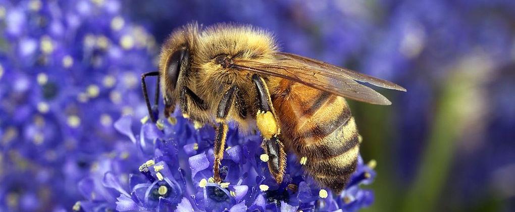 Sequencing bee pollen